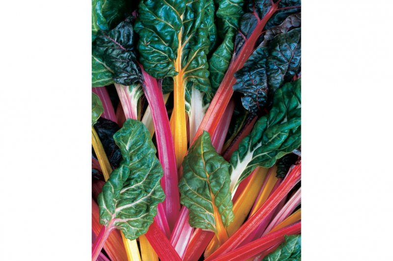 Bright Lights - Swiss Chard Seed
