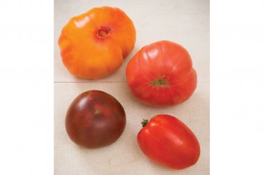 Heirloom Tomato Collection - Organic Seed