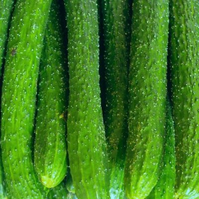 cucumber vegetable seeds for home garden