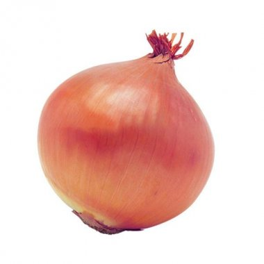 Giant Onion Seeds Vegetable Seed Kitchen Food Seasoner Potted Pl