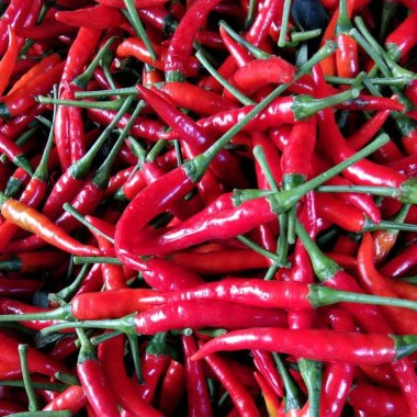 New Arrival Giant Spices Red Hot Pepper Seeds Plants Garden