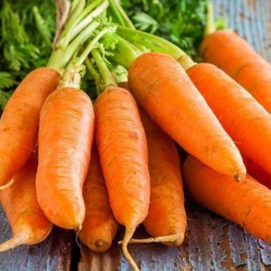 Spring and Autumn heyday Carrot seeds organic vegetable seeds