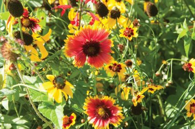 Xeriscape Mix Eastern U.S. - Flower Seed