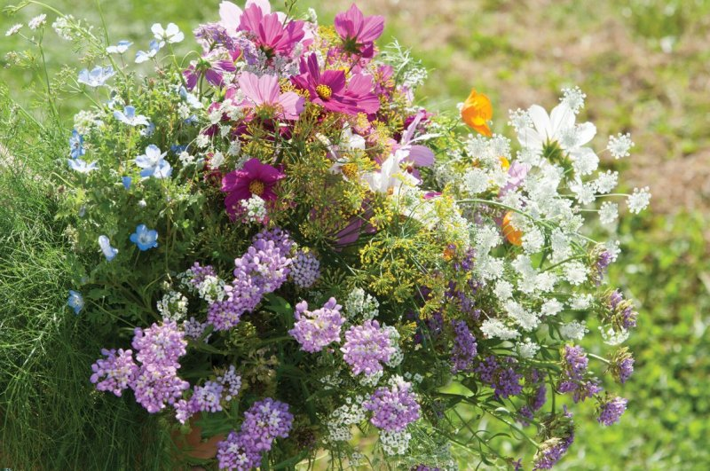 Beneficial Insect Flower Seeds Mix