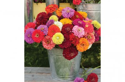 Benary's Giant Mix - Zinnia Seed