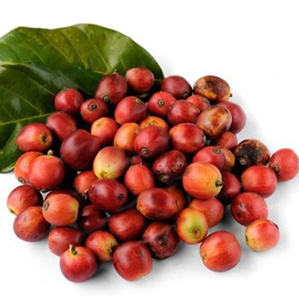Coffee Beans Seeds Garden Organic Bonsai Coffee Plant Seed Sd96068 3 50 Buy Fruit Trees Vegetable Seeds Flower Seeds Flowering Trees And Fruit Trees And Rose Trees Online Seedsday